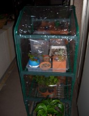 ベランダに簡易温室設置しました