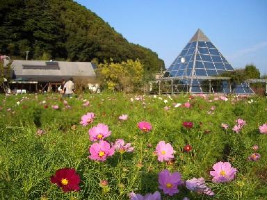 佐里秋桜ガーデン
