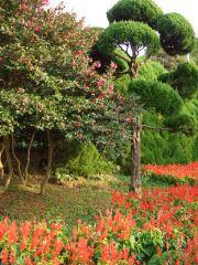 山茶花とサルビア