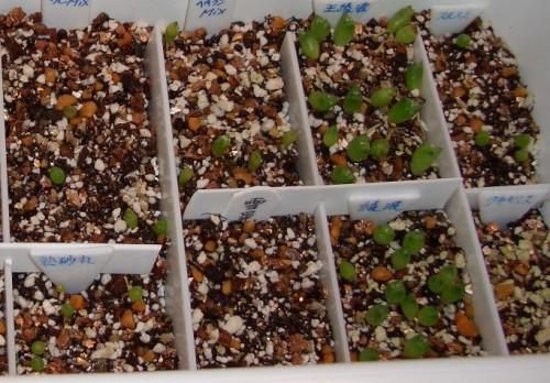 種サボ2007 一ヶ月 右側