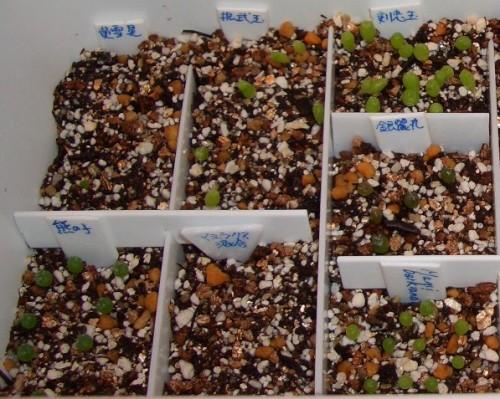 種サボ2007 一ヶ月 左側