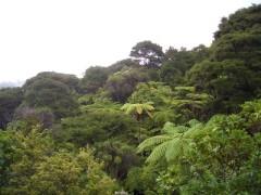 鉄道から見える森林風景