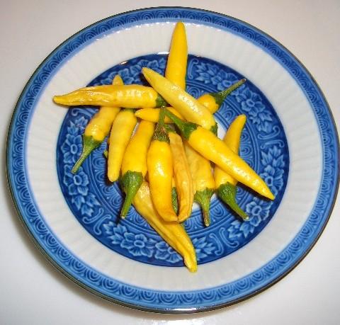 黄トウガラシ